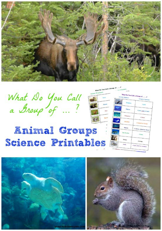 Groups of Animals printable worksheet