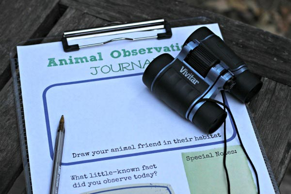 animal observations and helping kids to increase attention span
