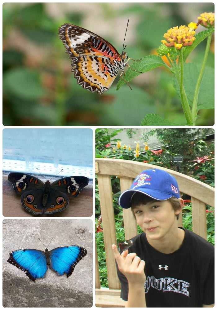 Learn about Butterflies and Butterfly Houses