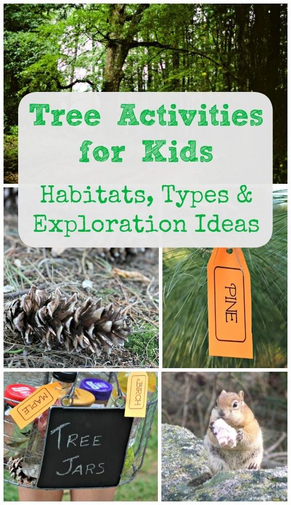Tree Activities for Kids: Animal Habitats, Tree Types & Nature Facts