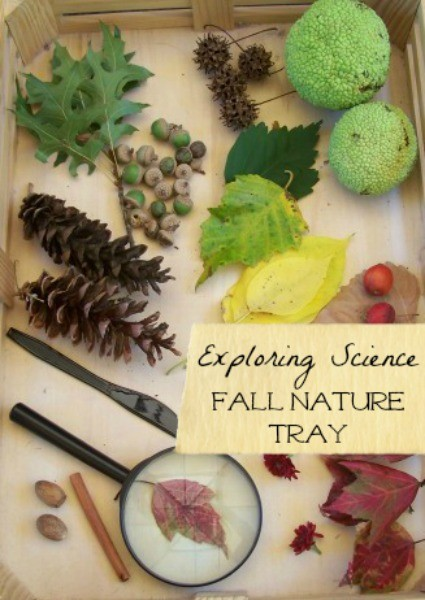 Fall nature table ideas and items to include for Autumn changes