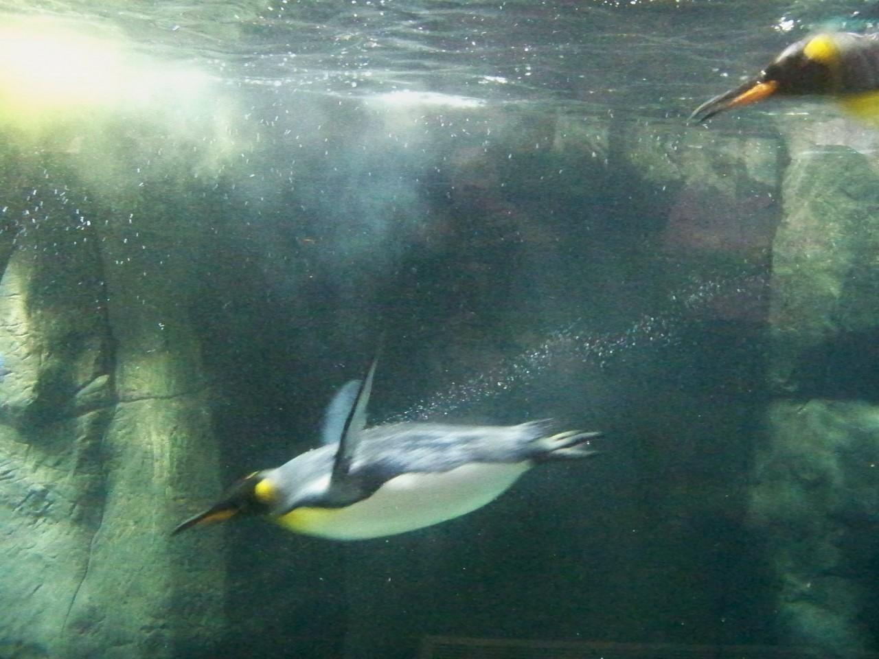 Penguin Unit Study: 17 Books & Activities for Kids