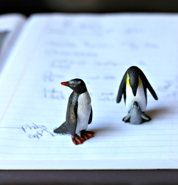 Penguin facts, activities, books and web cams