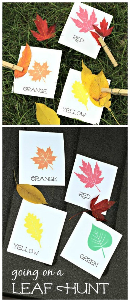 Leaf scavenger hunt with free printable cards!  Pair with the book We're Going on a Leaf Hunt