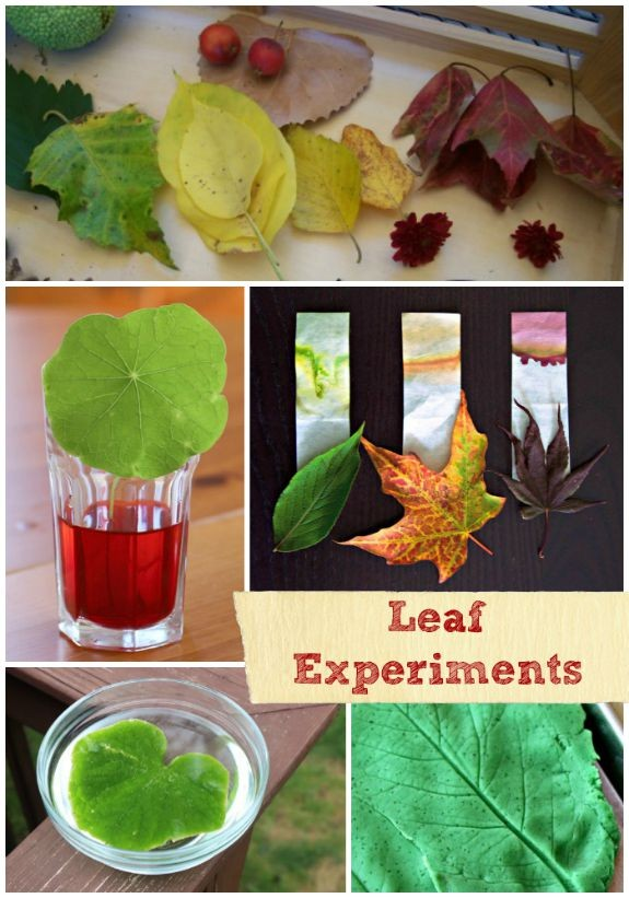 Leaf experiments