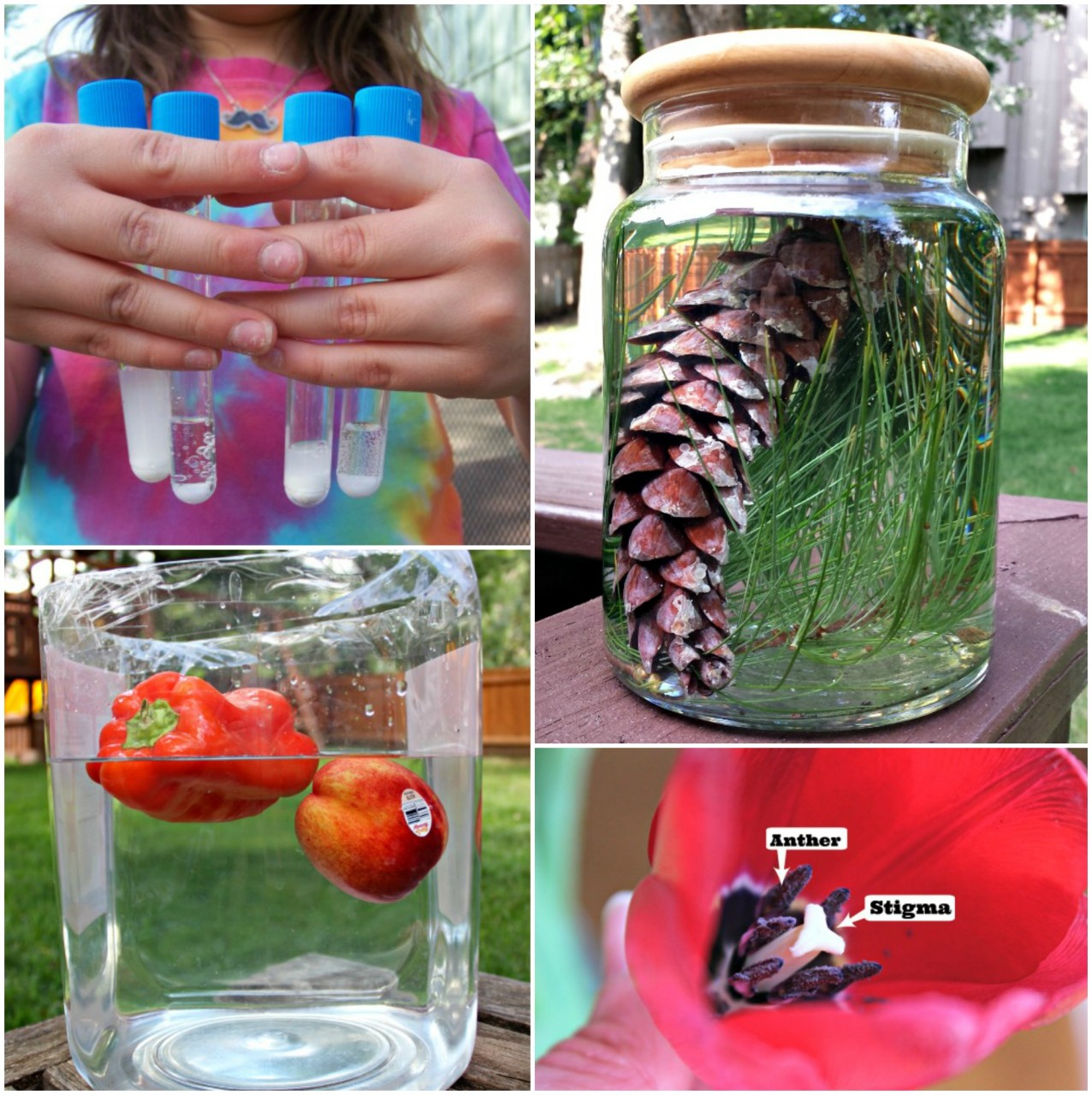 20 DIY Outdoor Science Experiments
