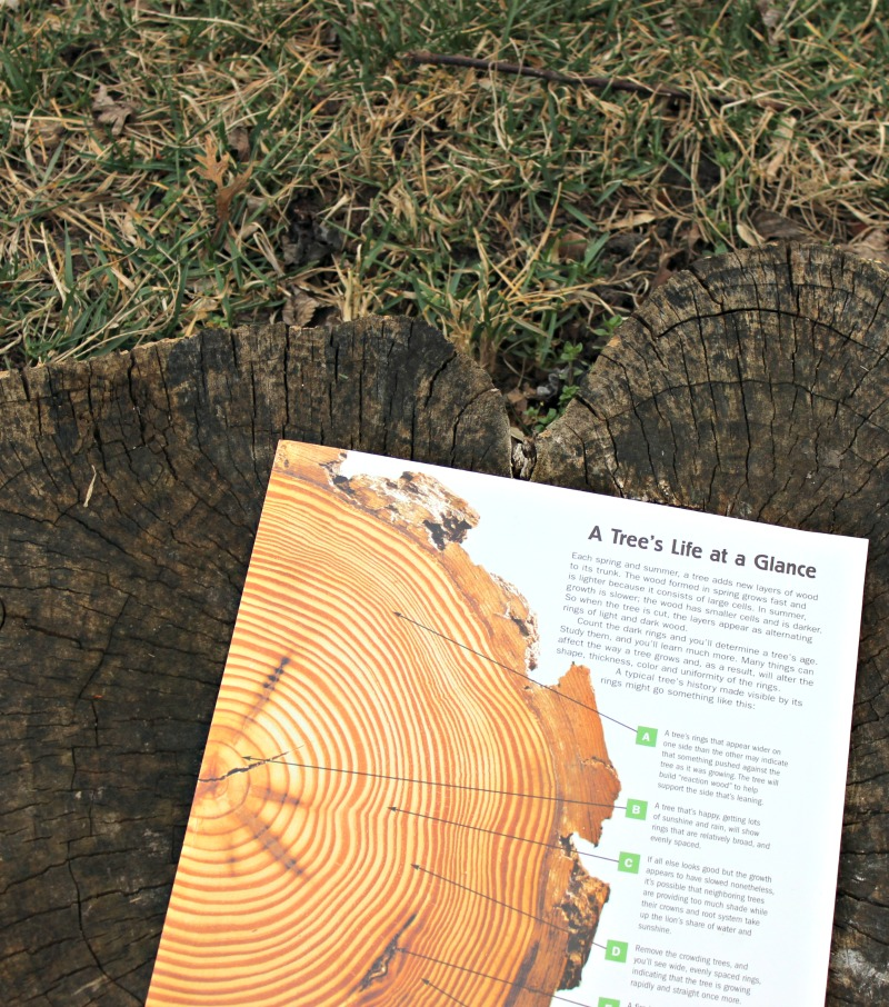 Learn to count tree rings and date a tree