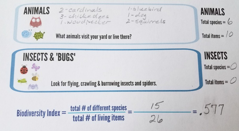 Ecology Science Activity Biodiversity In Your Own Backyard