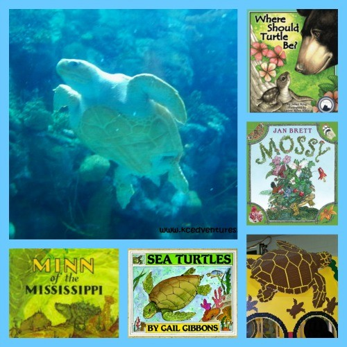 9 Terrific Books about Turtles
