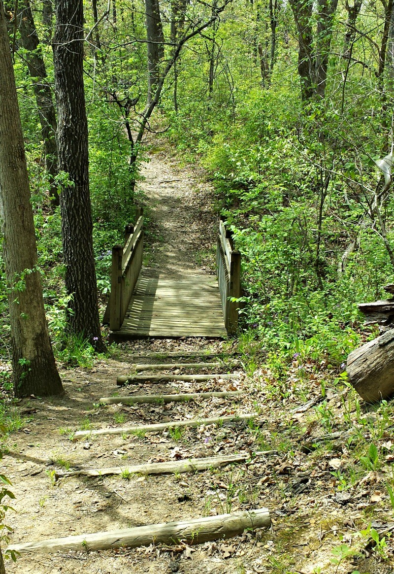Outdoor Fall Scavenger Hunt list