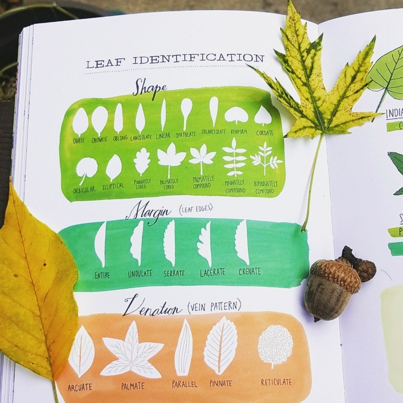 Nature book for kids and adults to take on a Fall Scavenger Hunt