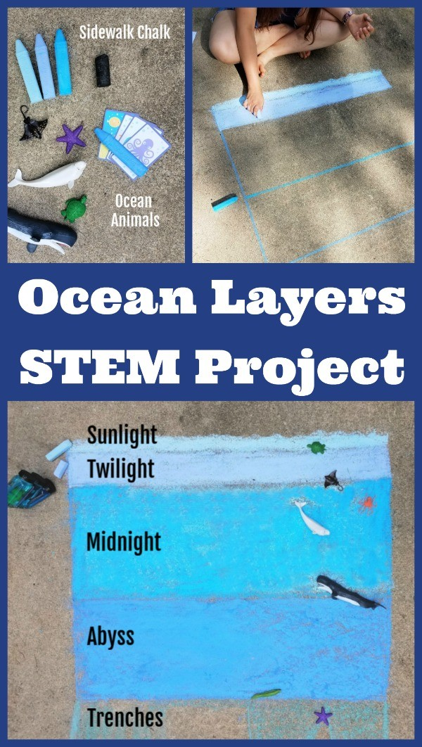 Ocean Activities for Kids - layers of the ocean and animal habitats