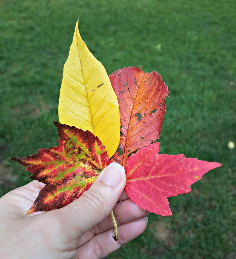 fall themed lesson plan ideas
