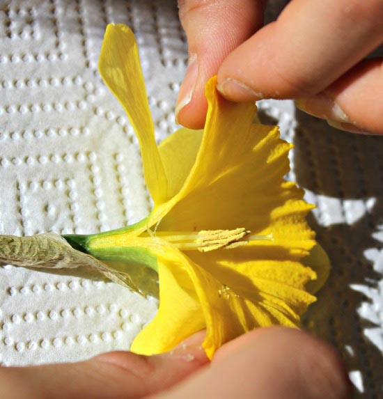 Learn about the parts of a flower and pollination
