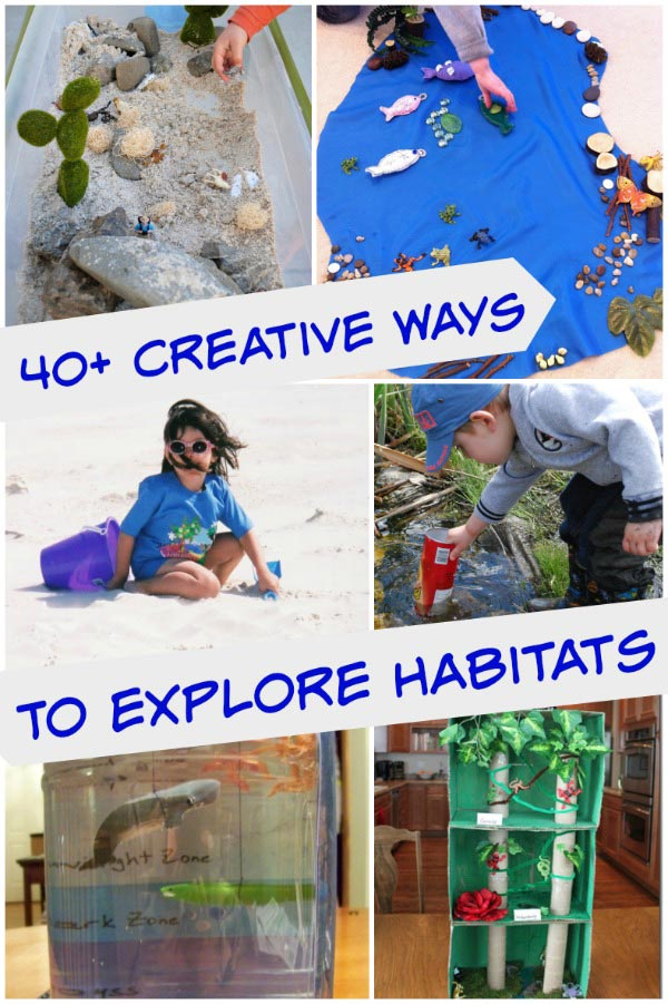 40 Science & Craft activities that explore habitats