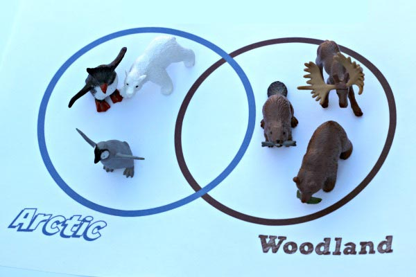 animal habitats: comparing arctic animals and forest animals