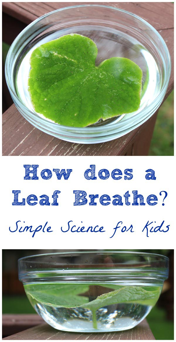 leaf science experiment