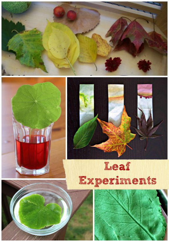 Easy Leaf science experiments for Fall