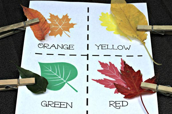 Fall leaf color matching activity perfect for toddlers and preschool kids!