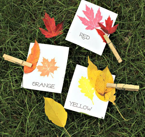 Fall leaf hunt activity for kids