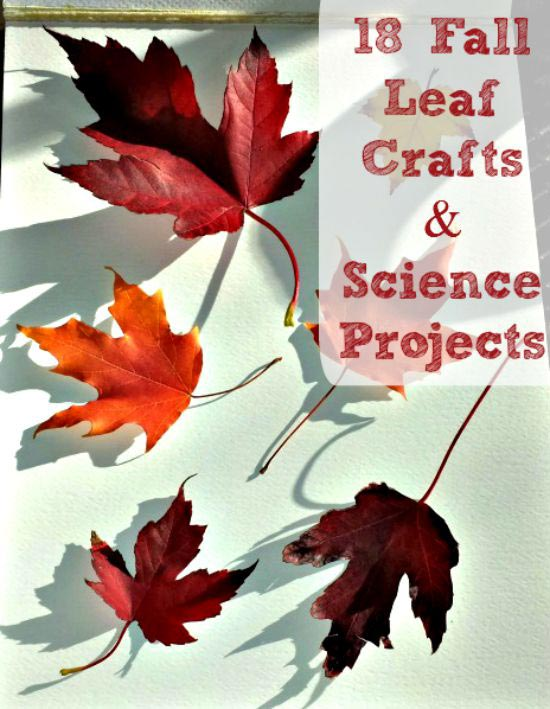 leaf crafts & science experiment projects for kids