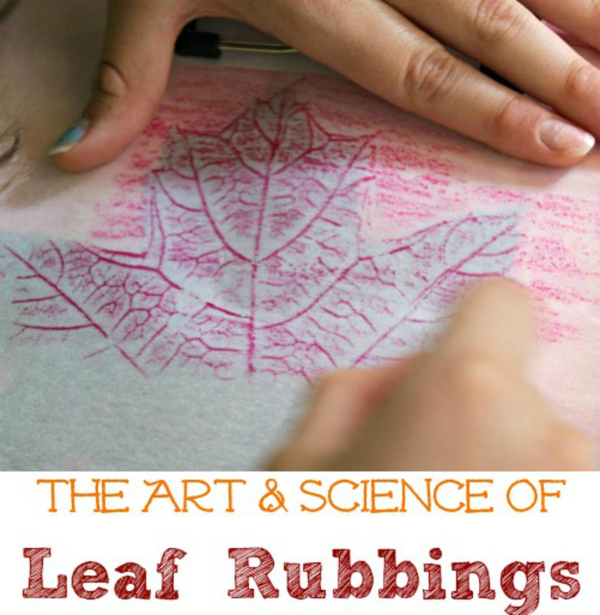 how to make leaf rubbings