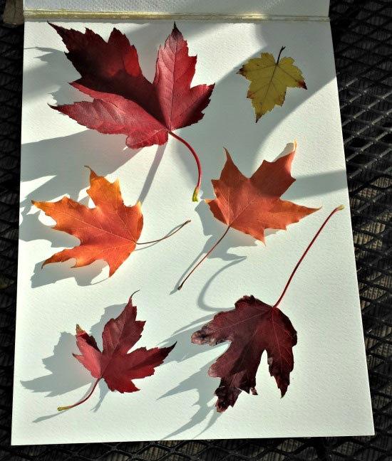 Fall theme leaf activities and books