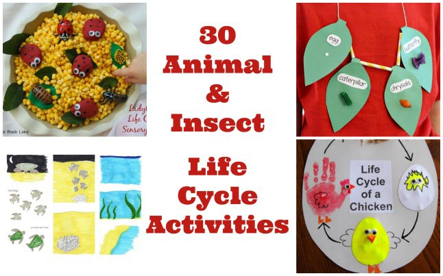 animal and insect life cycle projects