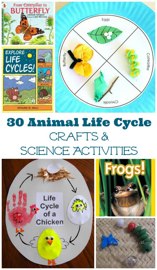 books and activities that explore animal life cycles