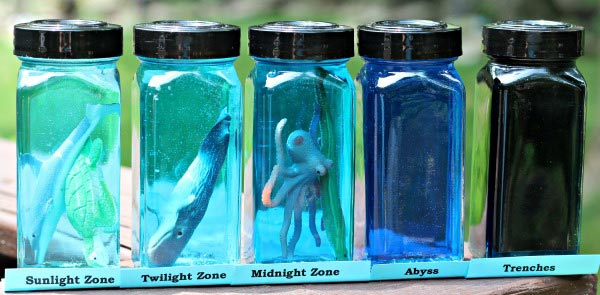 Explore ocean layers and zones plus the animals that live there with this fun science craft!
