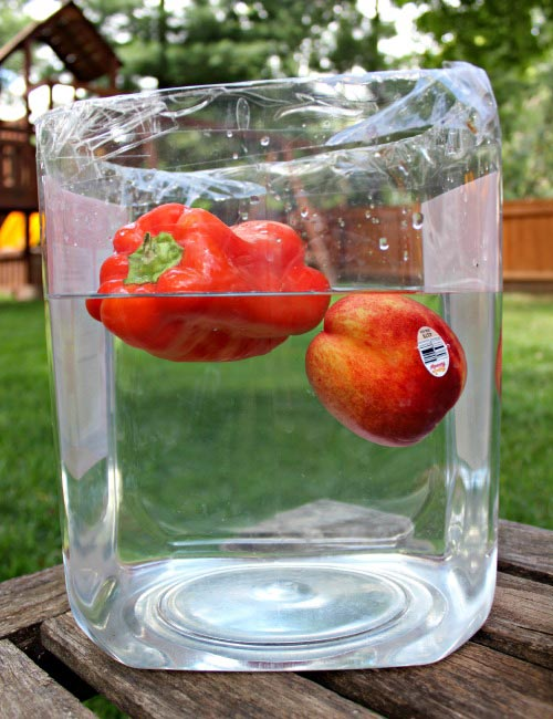 Easy outdoor science activities and experiments for the backyard