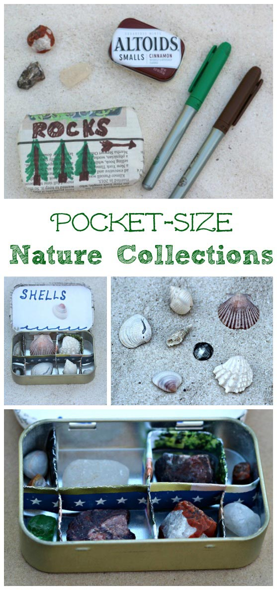 Tips for Kids on how to Start & Organize a Nature Collection | Great upcycled DIY Craft