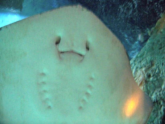 fun facts about stingrays