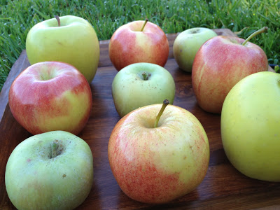 Apple Tasting Experiment