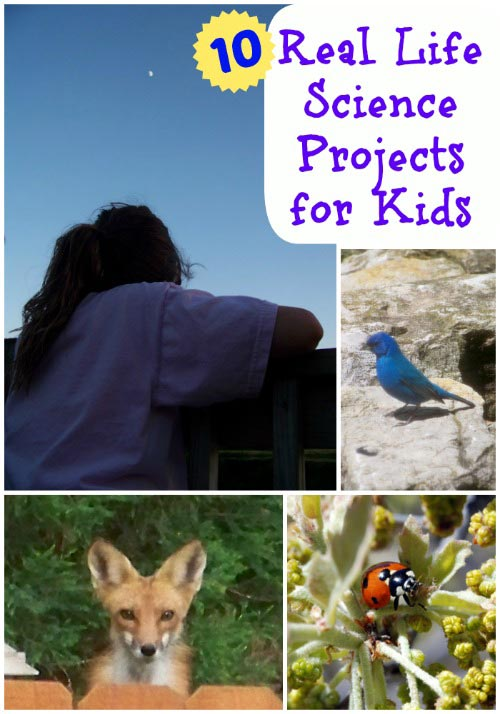 real life science projects for kids