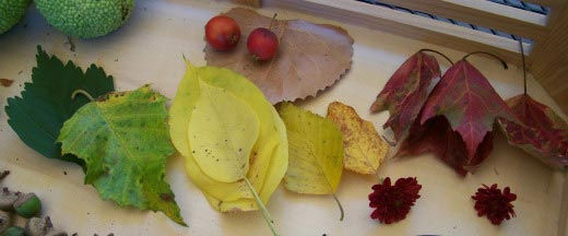 Variety of Fall leaves for an Autumn Nature activity