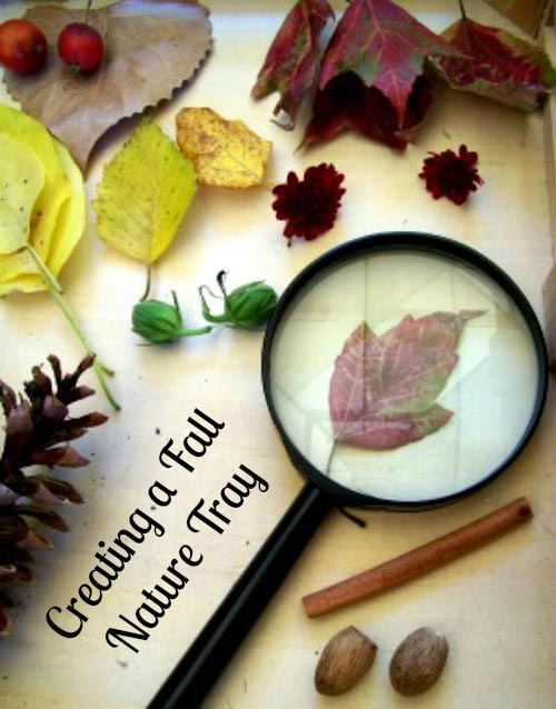 Creating a Fall Nature Tray or Table for kids to explore seasonal changes