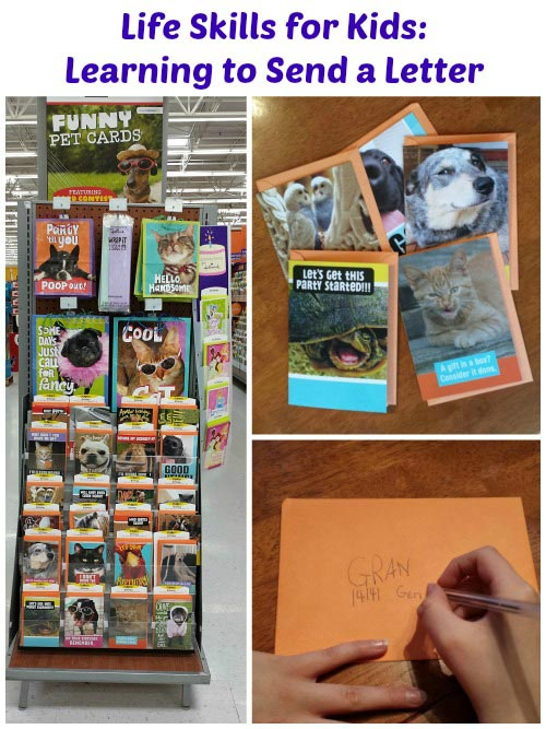Learning to Send a Letter #FunnyPetCards #shop