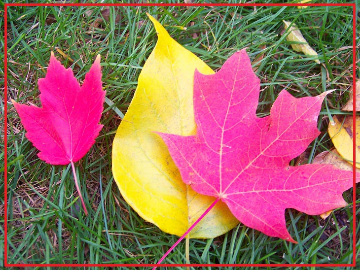 leaves-change-colors