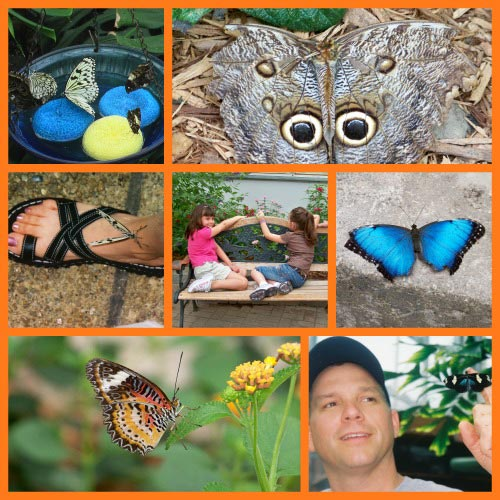 Discover & explore butterflies for kids