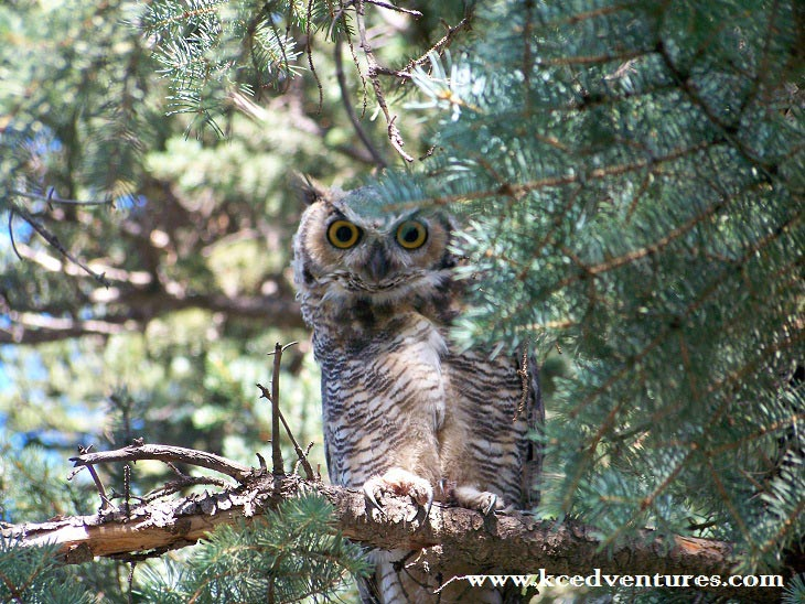 owl-at-rocky-mountain-national-park