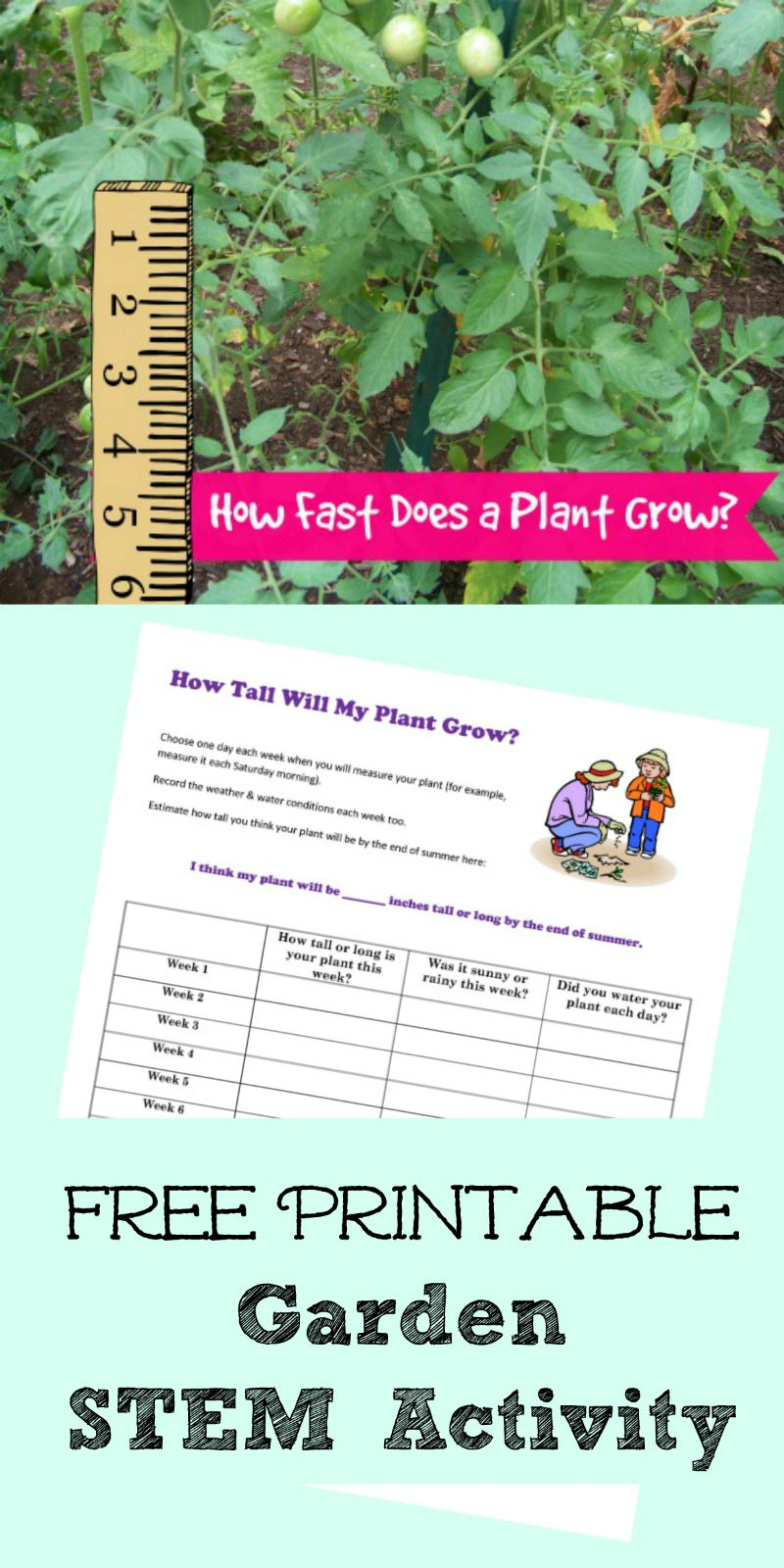 plant measurement activity worksheet
