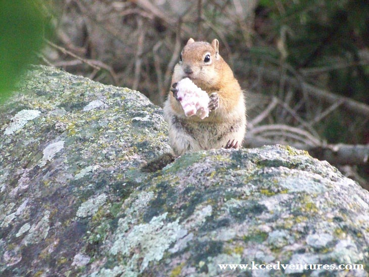 snacking-squirrel