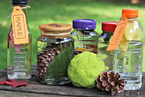 Nature sencory bottles and tree activities for preschool and elementary kids