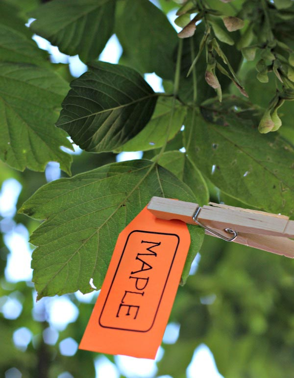tree identification tags - free printable!