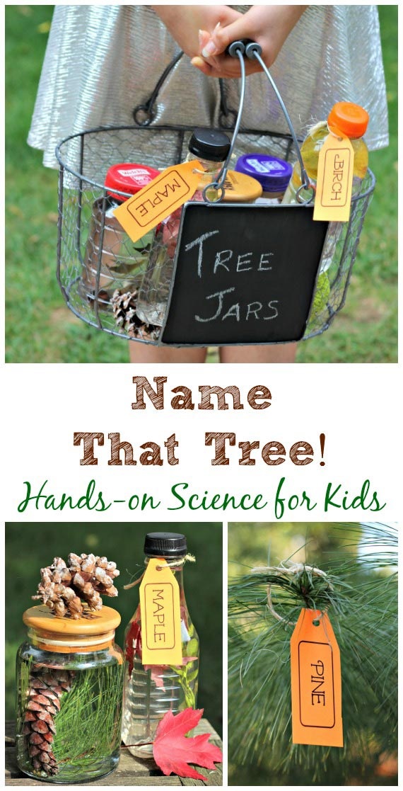 Fun tree identification scavenger hunt for kids!