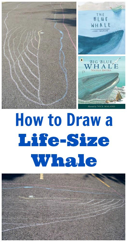How big is a blue whale? Draw a life size whale and see!